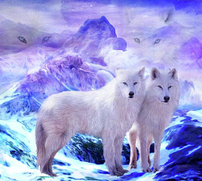 Mồ chôn của sói Bắc Cực: Lụi tàn không phải vì thử thách khắc nghiệt của tự nhiên, thứ gì đang chôn chúng? - Ảnh 4.