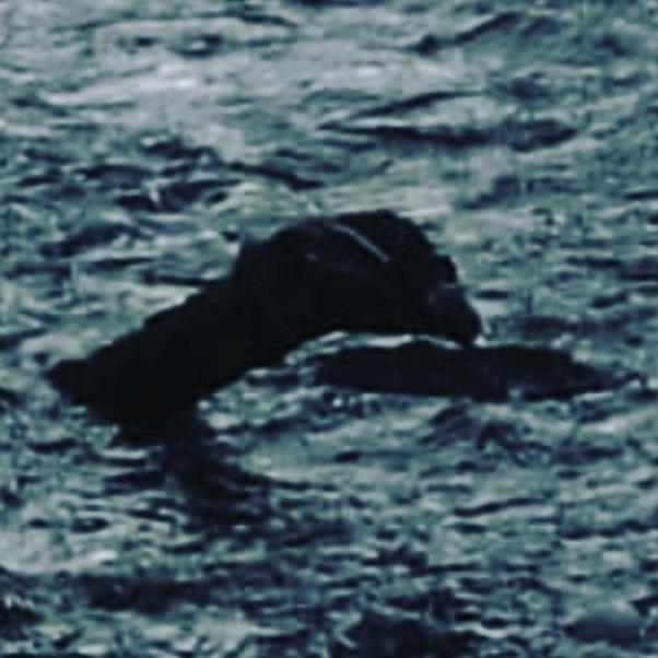 Bộ xương khổng lồ của sinh vật lạ trôi dạt vào bờ biển, nhiều dân bản xứ tin rằng đó là xác của quái vật hồ Loch Ness nổi tiếng - Ảnh 3.