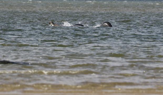 Bộ xương khổng lồ của sinh vật lạ trôi dạt vào bờ biển, nhiều dân bản xứ tin rằng đó là xác của quái vật hồ Loch Ness nổi tiếng - Ảnh 5.