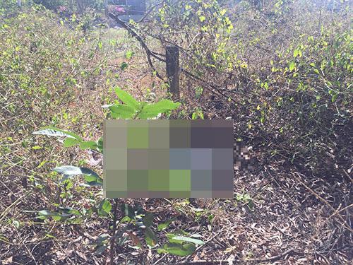 Phát hiện thi thể phụ nữ đang phân huỷ trong bụi rậm ở Bình Thuận - Ảnh 1.