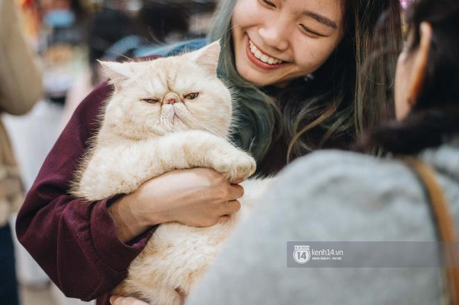 Đi thi mèo đẹp ở Hà Nội, các đại 'boss' để lại loạt khoảnh khắc cưng không đỡ nổi: Chảnh mèo là có thật! - ảnh 2