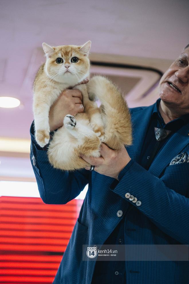 Đi thi mèo đẹp ở Hà Nội, các đại 'boss' để lại loạt khoảnh khắc cưng không đỡ nổi: Chảnh mèo là có thật! - ảnh 5