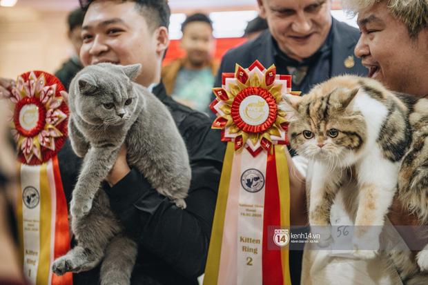 Đi thi mèo đẹp ở Hà Nội, các đại 'boss' để lại loạt khoảnh khắc cưng không đỡ nổi: Chảnh mèo là có thật! - ảnh 8