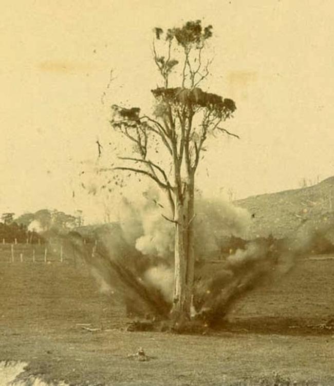 Chuyện về viên đạn kiên nhẫn ẩn thân 20 năm trong thân cây cuối cùng cũng giết được người cần giết và hoàn thành nhiệm vụ ngày xưa - Ảnh 4.