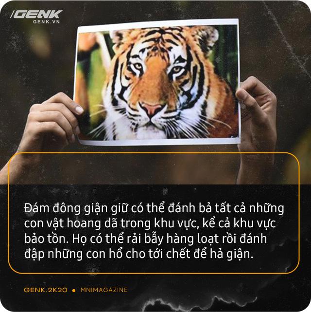 Những con hổ ăn thịt người ở Ấn Độ: Cái giá của sự bảo tồn? - Ảnh 13.