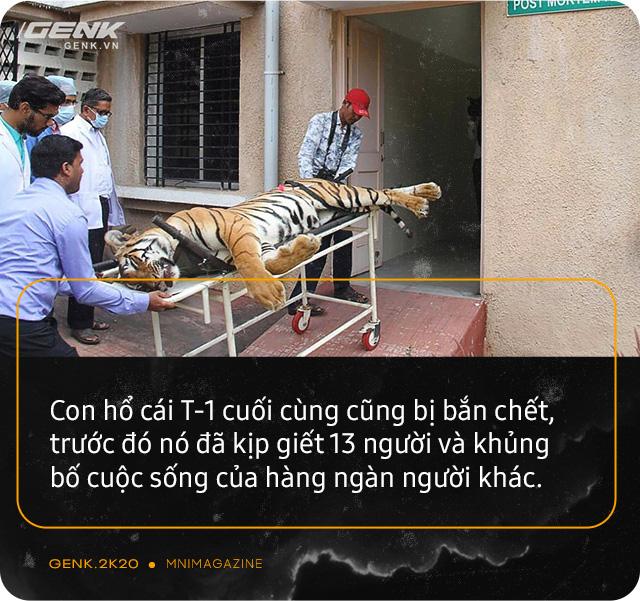 Những con hổ ăn thịt người ở Ấn Độ: Cái giá của sự bảo tồn? - Ảnh 16.