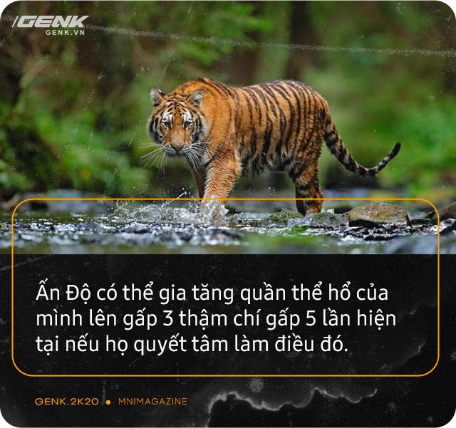 Những con hổ ăn thịt người ở Ấn Độ: Cái giá của sự bảo tồn? - Ảnh 20.