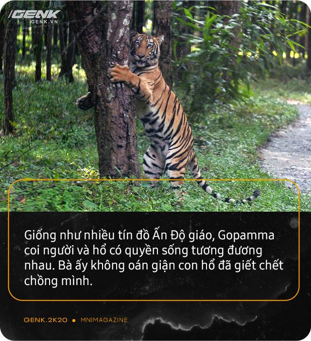 Những con hổ ăn thịt người ở Ấn Độ: Cái giá của sự bảo tồn? - Ảnh 3.