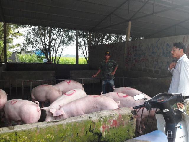 Giá gia cầm dần phục hồi, giá lợn đã bớt cao - Ảnh 2.