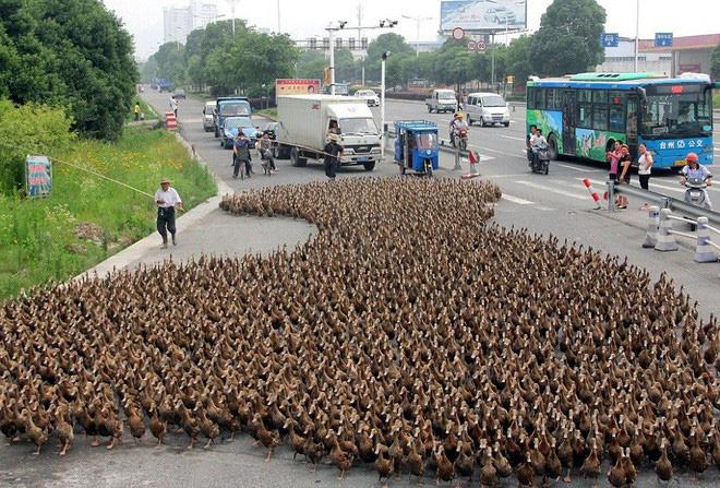 Không cần tới công nghệ cao siêu, Trung Quốc sử dụng 'độc chiêu' này để chống lại cuộc xâm lăng từ 400 tỷ con châu chấu - Ảnh 3.