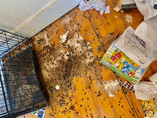 Khách trọ chuyển đi bỏ lại căn phòng ngập ngụa trong rác thải và mùi hôi thối, chủ nhà phải ngậm đắng nuốt cay chịu thiệt hại hơn 200 triệu - Ảnh 11.