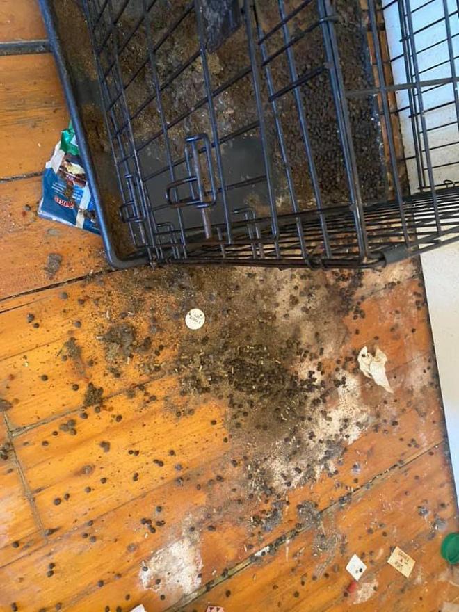 Khách trọ chuyển đi bỏ lại căn phòng ngập ngụa trong rác thải và mùi hôi thối, chủ nhà phải ngậm đắng nuốt cay chịu thiệt hại hơn 200 triệu - Ảnh 10.