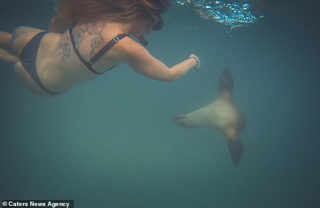Quyết định bơi cùng bầy sư tử biển, cô gái trẻ gặp phải sự cố đáng sợ - Ảnh 2.