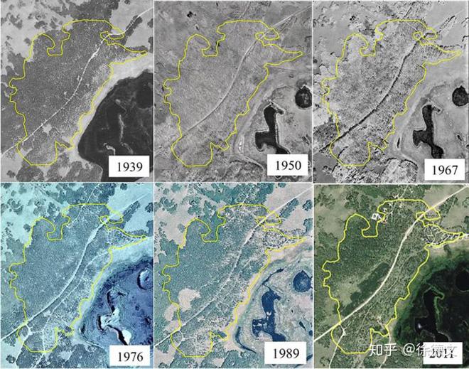 Dù sống thọ tới 80.000 năm tuổi và đạt 5,9 triệu kg, sinh vật lớn nhất và lâu đời nhất thế giới vẫn đang chết dần - ảnh 4