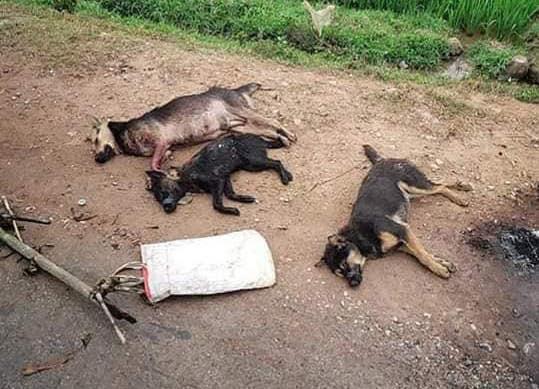 Vụ trộm chó bị đốt xe, đánh tử vong: Cả 2 đã từng bị đánh vì đi trộm chó - Ảnh 1.