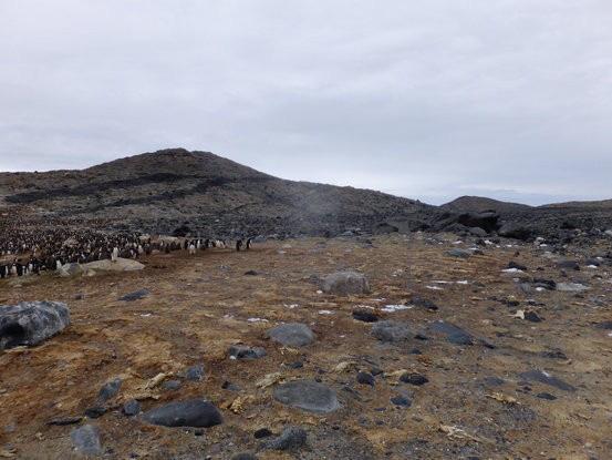 Tìm thấy xác chim 46.000 năm vẫn còn nguyên - Ảnh 1.