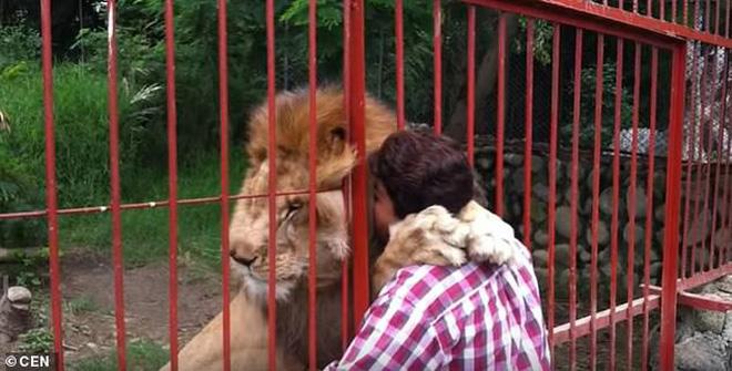 Con sư tử gầy rộc, hốc hác đến mức lộ cả xương sườn và không thể đứng dậy nổi sau khi phải rời xa người chăm sóc - Ảnh 6.