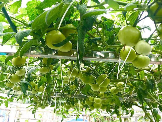 Choáng với trang trại nuôi trồng thập cẩm trên nóc nhà ở giữa Thủ đô - Ảnh 2.