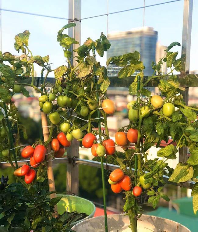 Choáng với trang trại nuôi trồng thập cẩm trên nóc nhà ở giữa Thủ đô - Ảnh 11.