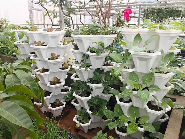 Choáng với trang trại nuôi trồng thập cẩm trên nóc nhà ở giữa Thủ đô - Ảnh 13.