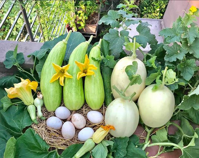 Choáng với trang trại nuôi trồng thập cẩm trên nóc nhà ở giữa Thủ đô - Ảnh 6.