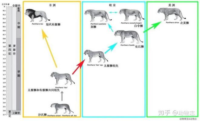 Yangs Tiger: Sư tử bản địa của Trung Quốc, nhưng lại được gọi là hổ - Ảnh 5.