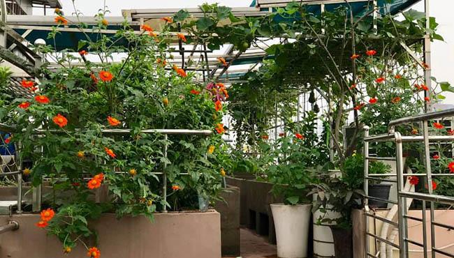 Choáng với trang trại nuôi trồng thập cẩm trên nóc nhà ở giữa Thủ đô - Ảnh 9.