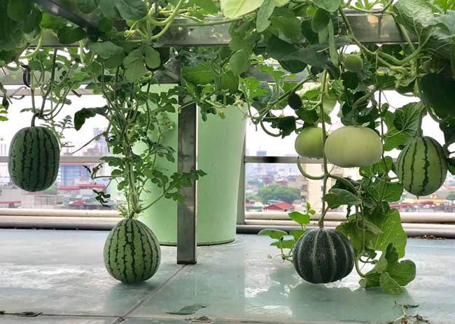 Choáng với trang trại nuôi trồng thập cẩm trên nóc nhà ở giữa Thủ đô - Ảnh 10.