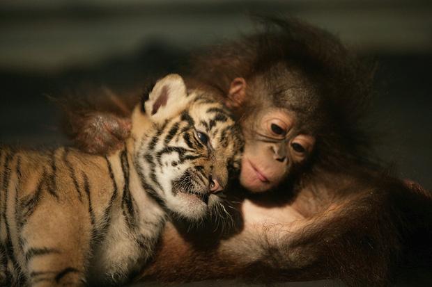8 sự thật chứng minh các loài vật có thể giống con người đến mức đáng kinh ngạc, thậm chí còn giàu cảm xúc hơn chính chúng ta - Ảnh 1.