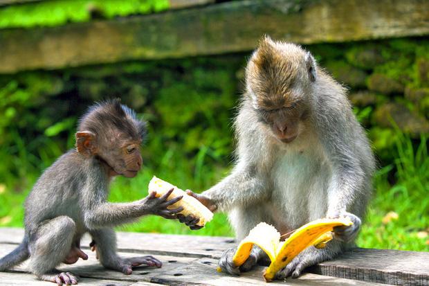 8 sự thật chứng minh các loài vật có thể giống con người đến mức đáng kinh ngạc, thậm chí còn giàu cảm xúc hơn chính chúng ta - Ảnh 8.