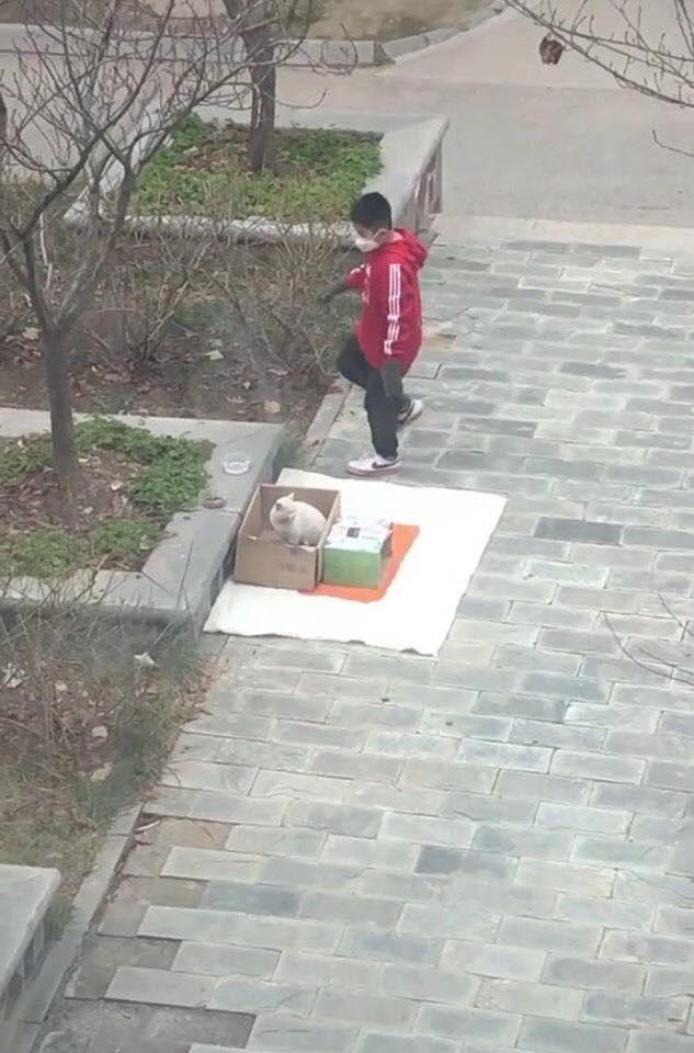 Gặp chú mèo hoang, cậu bé đã có hành động khiến ai chứng kiến cũng tấm tắc ngợi khen - Ảnh 4.