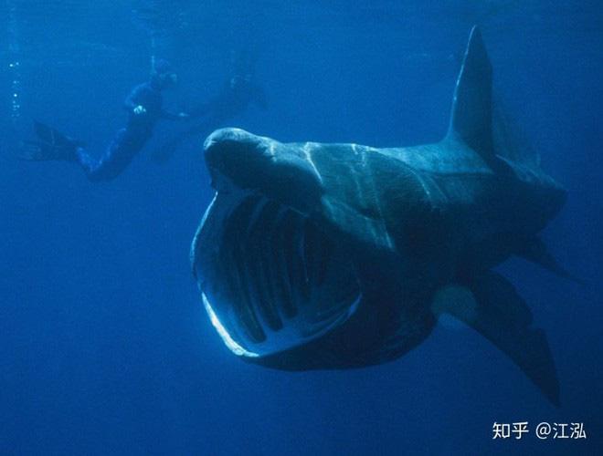 Leedsichthys: Máy hút bụi của biển cả Kỷ Jura từng bị hiểu nhầm là khủng long - Ảnh 11.