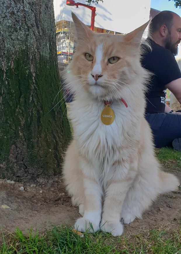 Chú mèo vương giả sở hữu 30.000 người hâm mộ và được tôn vinh như ông hoàng tại quê nhà - Ảnh 11.