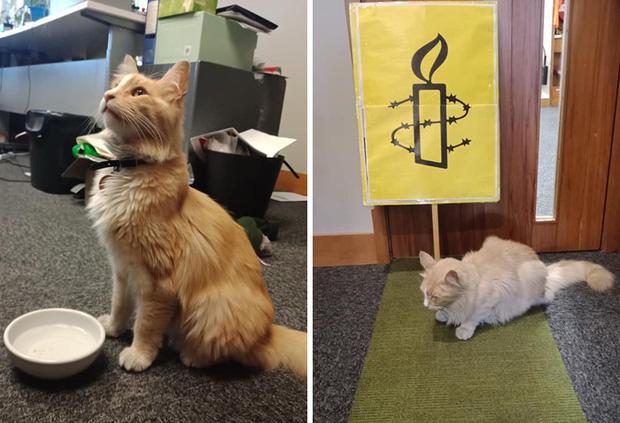 Chú mèo vương giả sở hữu 30.000 người hâm mộ và được tôn vinh như ông hoàng tại quê nhà - Ảnh 17.