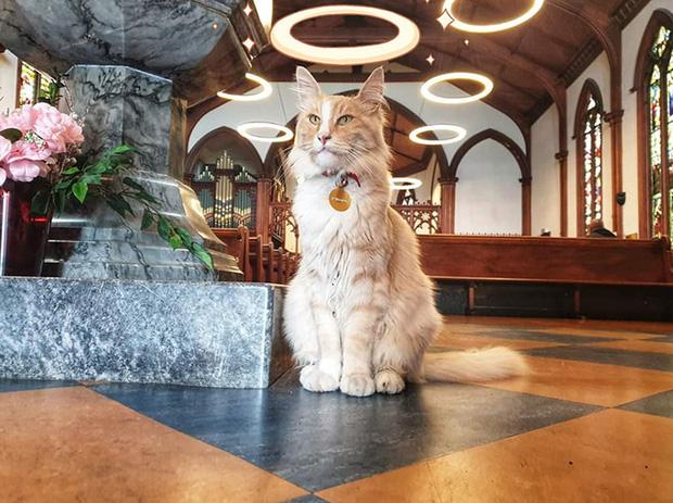 Chú mèo vương giả sở hữu 30.000 người hâm mộ và được tôn vinh như ông hoàng tại quê nhà - Ảnh 6.