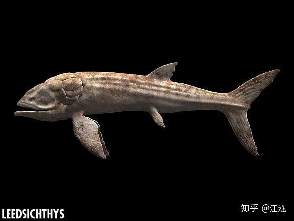 Leedsichthys: Máy hút bụi của biển cả Kỷ Jura từng bị hiểu nhầm là khủng long - Ảnh 9.