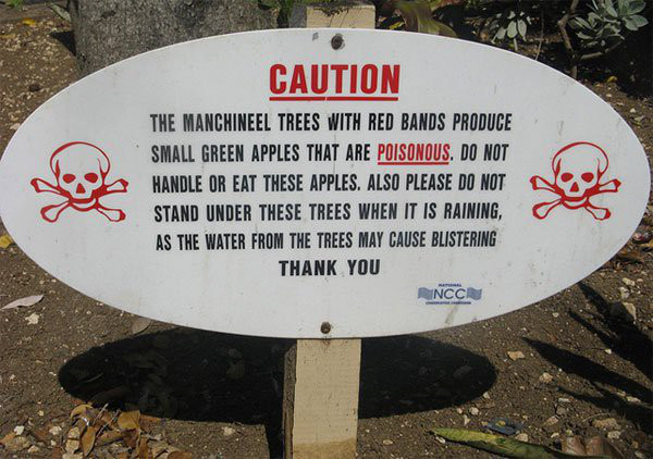 1001 thắc mắc: Loài cây nào mà đứng cạnh cũng khiến con người mất mạng? - Ảnh 1.