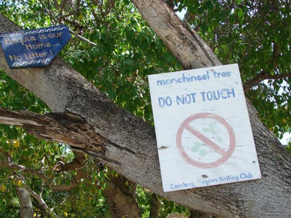 1001 thắc mắc: Loài cây nào mà đứng cạnh cũng khiến con người mất mạng? - Ảnh 2.