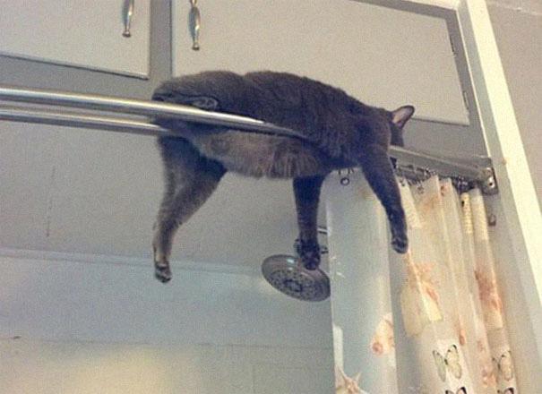 12 bằng chứng cho thấy mèo là lũ tự nhiên như ruồi, bạ đâu cũng lăn ra ngủ được! - Ảnh 2.