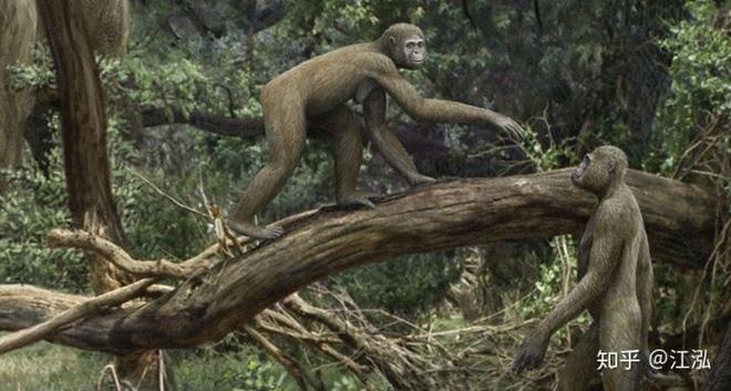 Tổ tiên của loài người đã từng gây ra sự tuyệt chủng của động vật từ 4 triệu năm về trước - Ảnh 3.
