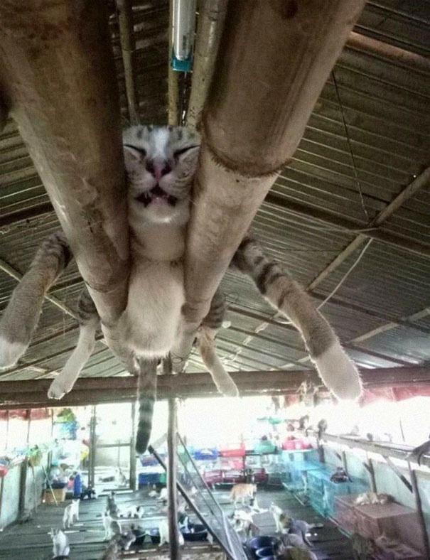 12 bằng chứng cho thấy mèo là lũ tự nhiên như ruồi, bạ đâu cũng lăn ra ngủ được! - Ảnh 3.
