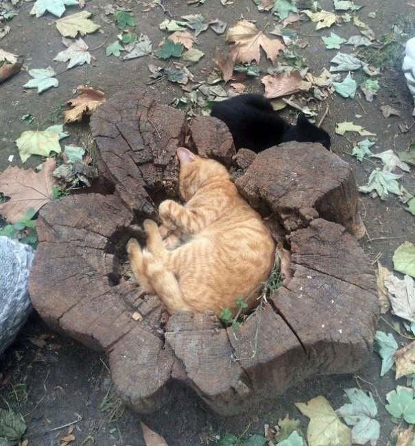 12 bằng chứng cho thấy mèo là lũ tự nhiên như ruồi, bạ đâu cũng lăn ra ngủ được! - Ảnh 7.