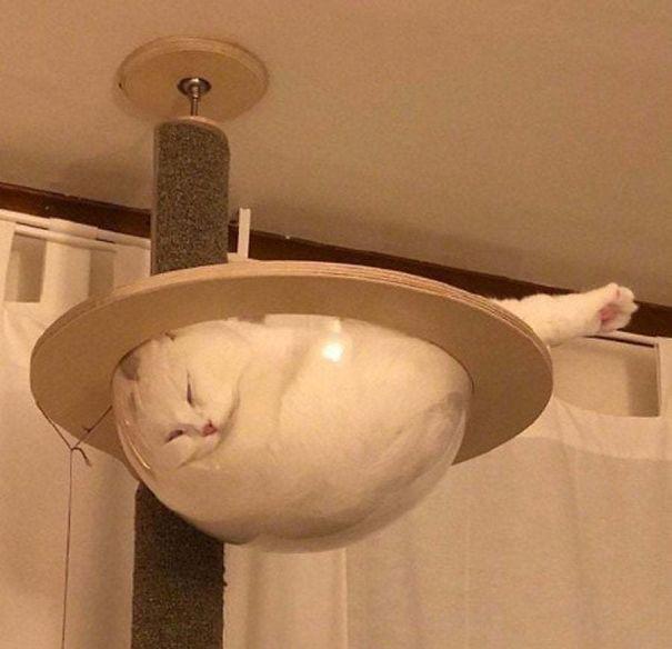 12 bằng chứng cho thấy mèo là lũ tự nhiên như ruồi, bạ đâu cũng lăn ra ngủ được! - Ảnh 8.