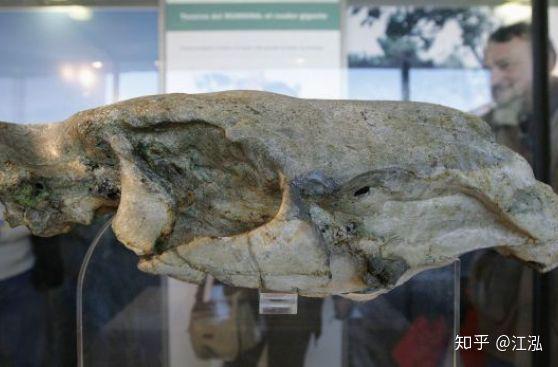Loài chuột cổ đại lớn nhất từng tồn tại trên Trái Đất có thể đạt kích thước tương đương với một con bò tót - Ảnh 3.