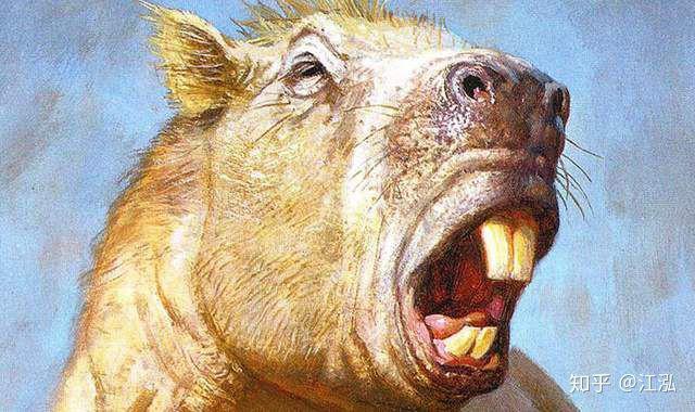 Loài chuột cổ đại lớn nhất từng tồn tại trên Trái Đất có thể đạt kích thước tương đương với một con bò tót - Ảnh 8.
