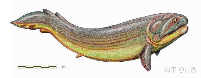 Rhizodus hibberti : Quái vật kinh hoàng của kỷ Carbon - Ảnh 6.