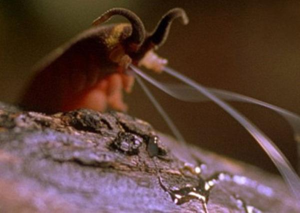 """Giải mã bí ẩn: Sinh vật quái dị tấn công con mồi như """"Người Nhện"""" - Ảnh 2."""