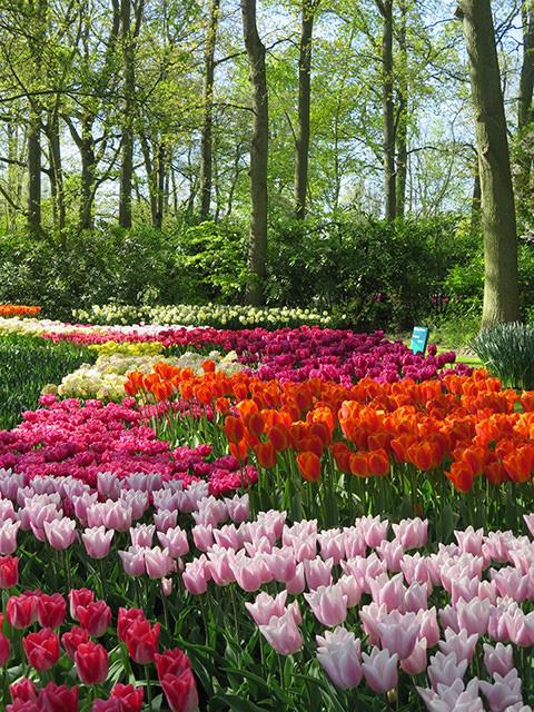 Keukenhof - Thiên đường của các loài hoa - Ảnh 13.