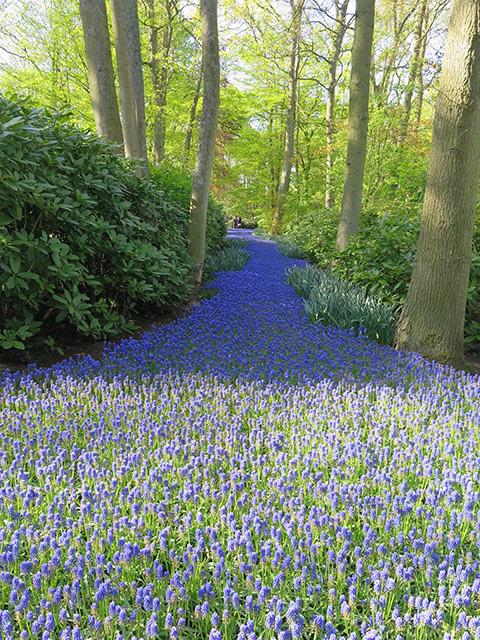 Keukenhof - Thiên đường của các loài hoa - Ảnh 14.