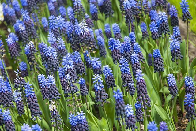 Keukenhof - Thiên đường của các loài hoa - Ảnh 15.